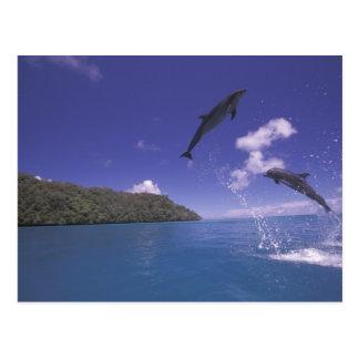 Pacific, Micronesia, Palau, Bottlenose 3 Postcard