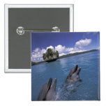 Pacific, Micronesia, Palau, Bottlenose 2 Inch Square Button