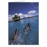 Pacific, Micronesia, Palau, Bottlenose Greeting Card