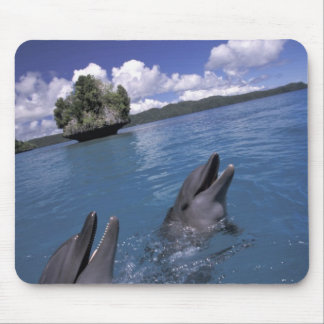 Pacific, Micronesia, Palau, Bottlenose Mouse Pad
