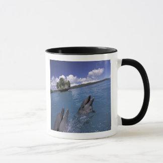 Pacific, Micronesia, Palau, Bottlenose Mug