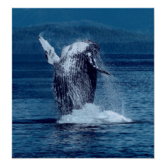 PACIFIC NORTHWEST BREACHING HUMPBACK WHALE POSTER