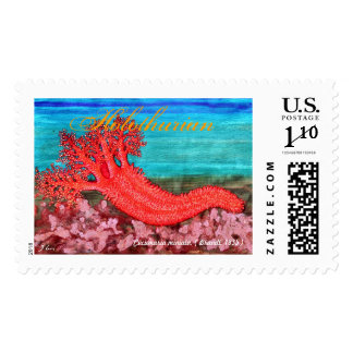 Pacific Orange Holothurian Stamp