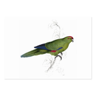 Pacific Parrakeet by Edward Lear Large Business Card
