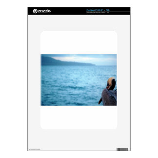 pacific pelican iPad decal