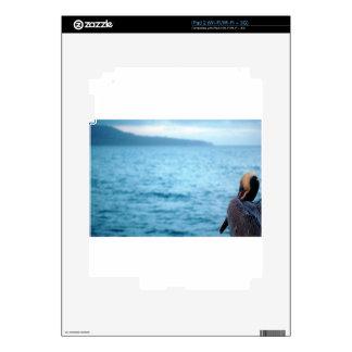 pacific pelican skin for iPad 2