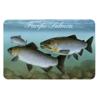 Pacific Salmon Painting Magnet