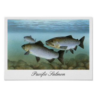 Pacific Salmon Painting Print