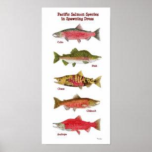 Pacific Salmon Species Art Poster