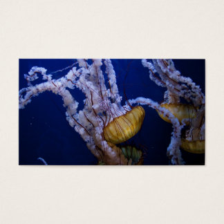 Pacific sea nettle business card