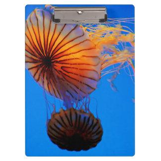 Pacific Sea Nettle (Chrysaora Fuscescens) Clipboard