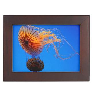 Pacific Sea Nettle (Chrysaora Fuscescens) Keepsake Box