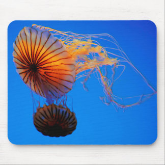 Pacific Sea Nettle (Chrysaora Fuscescens) Mouse Pad