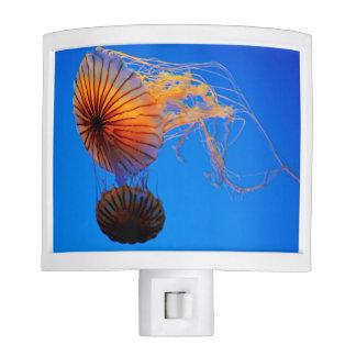 Pacific Sea Nettle (Chrysaora Fuscescens) Night Light