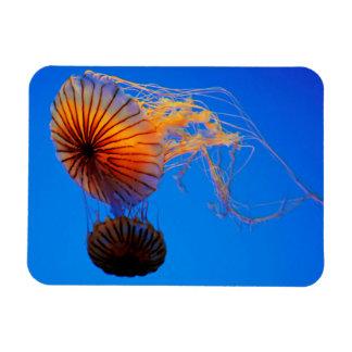 Pacific Sea Nettle (Chrysaora Fuscescens) Rectangular Photo Magnet