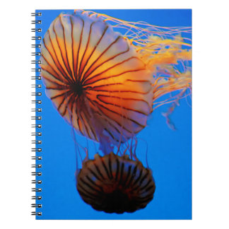 Pacific Sea Nettle (Chrysaora Fuscescens) Spiral Notebook