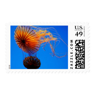 Pacific Sea Nettle (Chrysaora Fuscescens) Stamp
