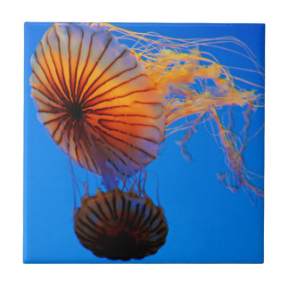 Pacific Sea Nettle (Chrysaora Fuscescens) Tile