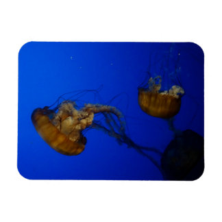 Pacific Sea Nettle Jellyfish Photo Magnet