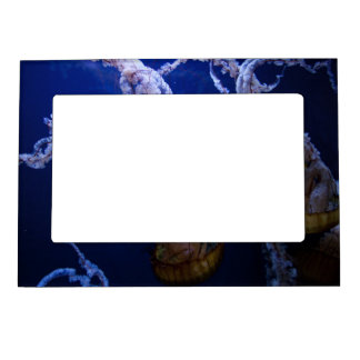 Pacific sea nettle magnetic photo frame