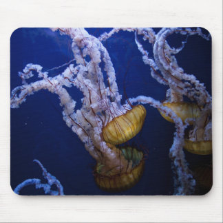 Pacific sea nettle mouse pad