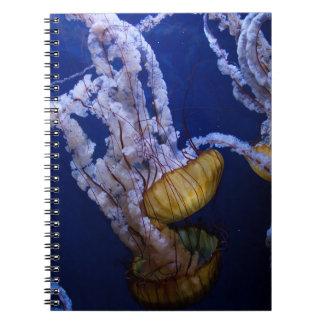Pacific sea nettle notebook