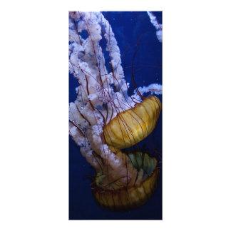 Pacific sea nettle rack card