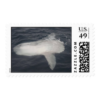 Pacific Sunfish (Mola mola) Stamps