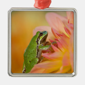 Pacific tree frog on flowers in our garden, 2 metal ornament