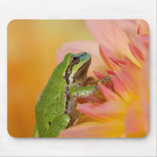 Pacific tree frog on flowers in our garden, 2 mouse pad