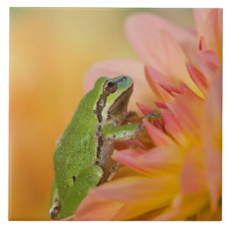 Pacific tree frog on flowers in our garden, 2 ceramic tile