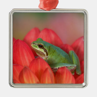 Pacific tree frog on flowers in our garden, 3 metal ornament
