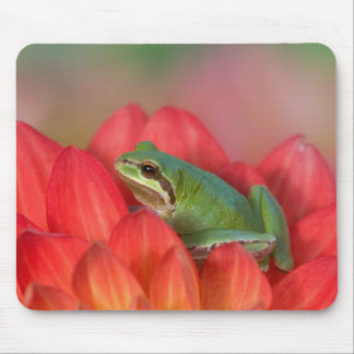 Pacific tree frog on flowers in our garden, 3 mouse pad