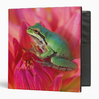 Pacific tree frog on flowers in our garden, 4 binder