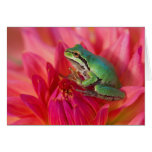 Pacific tree frog on flowers in our garden, 4 greeting cards