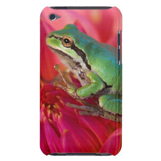 Pacific tree frog on flowers in our garden, 4 Case-Mate iPod touch case