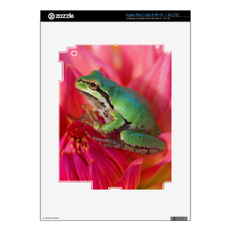 Pacific tree frog on flowers in our garden, 4 iPad 3 skin