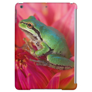Pacific tree frog on flowers in our garden, 4 iPad air cases