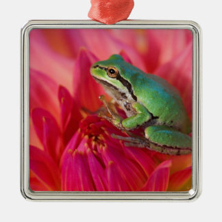 Pacific tree frog on flowers in our garden, 4 metal ornament