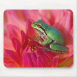 Pacific tree frog on flowers in our garden, 4 mousepads