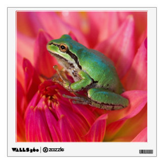 Pacific tree frog on flowers in our garden, 4 wall stickers