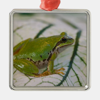 Pacific tree frog on flowers in our garden, metal ornament