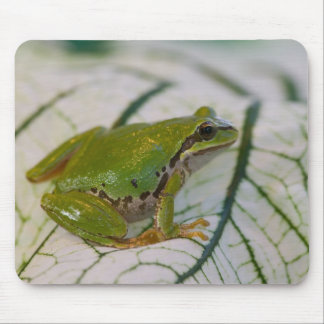Pacific tree frog on flowers in our garden, mouse pad