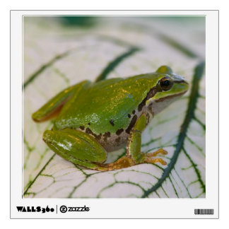 Pacific tree frog on flowers in our garden, room stickers