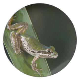 Pacific Tree Frog (Pseudacris regilla) Party Plate