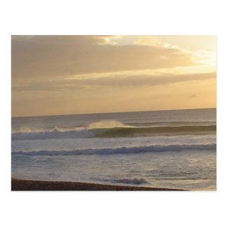 Pacific untamed postcard