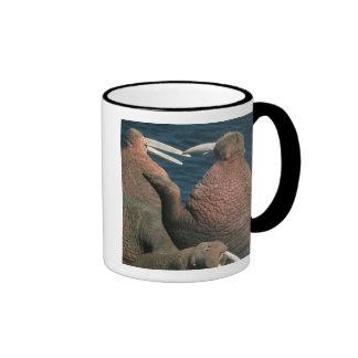 Pacific Walrus Odobenus rosmarus) Males 2 Ringer Coffee Mug
