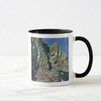 Pacific Walrus Odobenus rosmarus) Males Mug