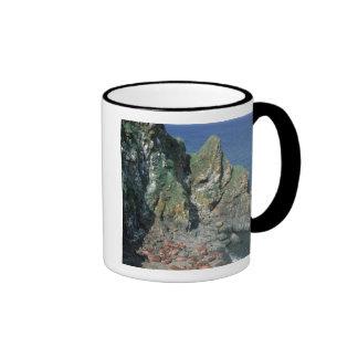 Pacific Walrus Odobenus rosmarus) Males Ringer Coffee Mug