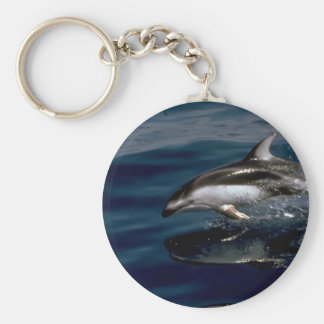 Pacific white-sided dolphin keychain